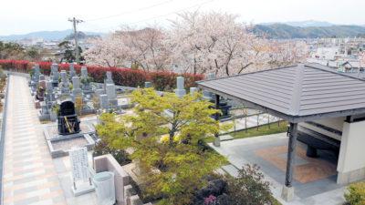 羽ノ浦 桜
